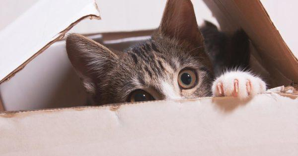 less stressful moving pets cats dogs animals