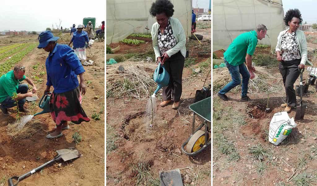 food trees africa ecobox tree planting