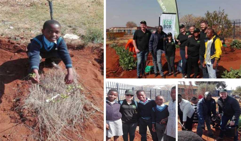 tree planting food africa primary school ecobox