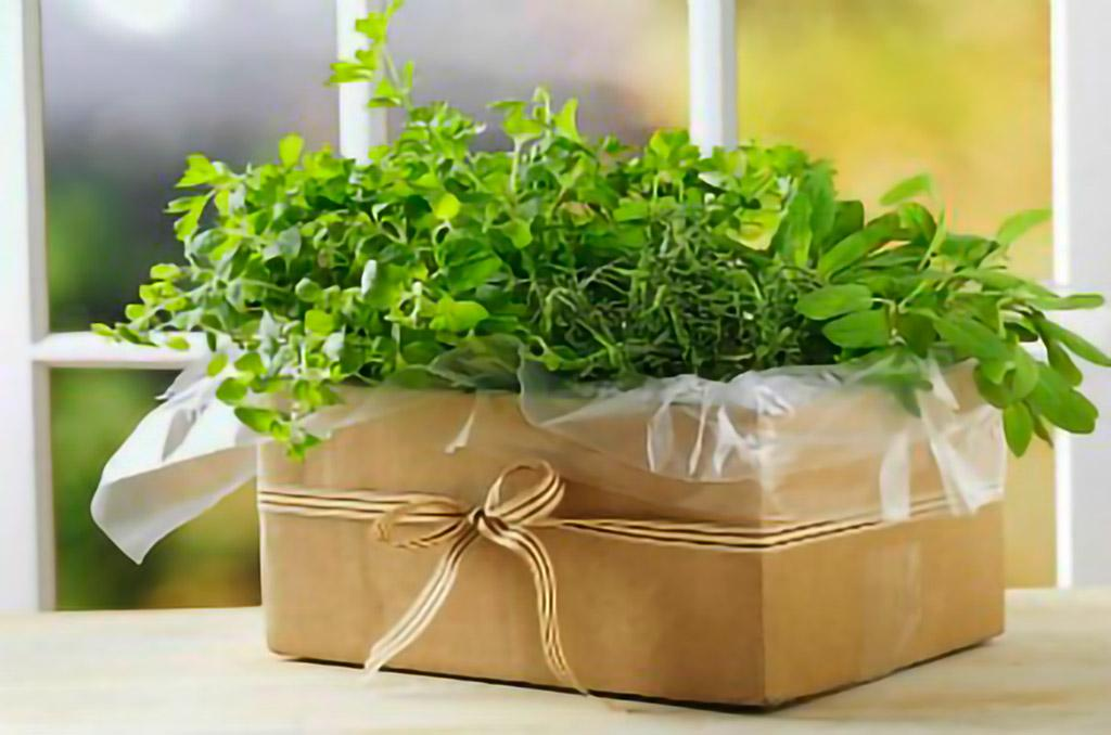 indoor planter cardboard box